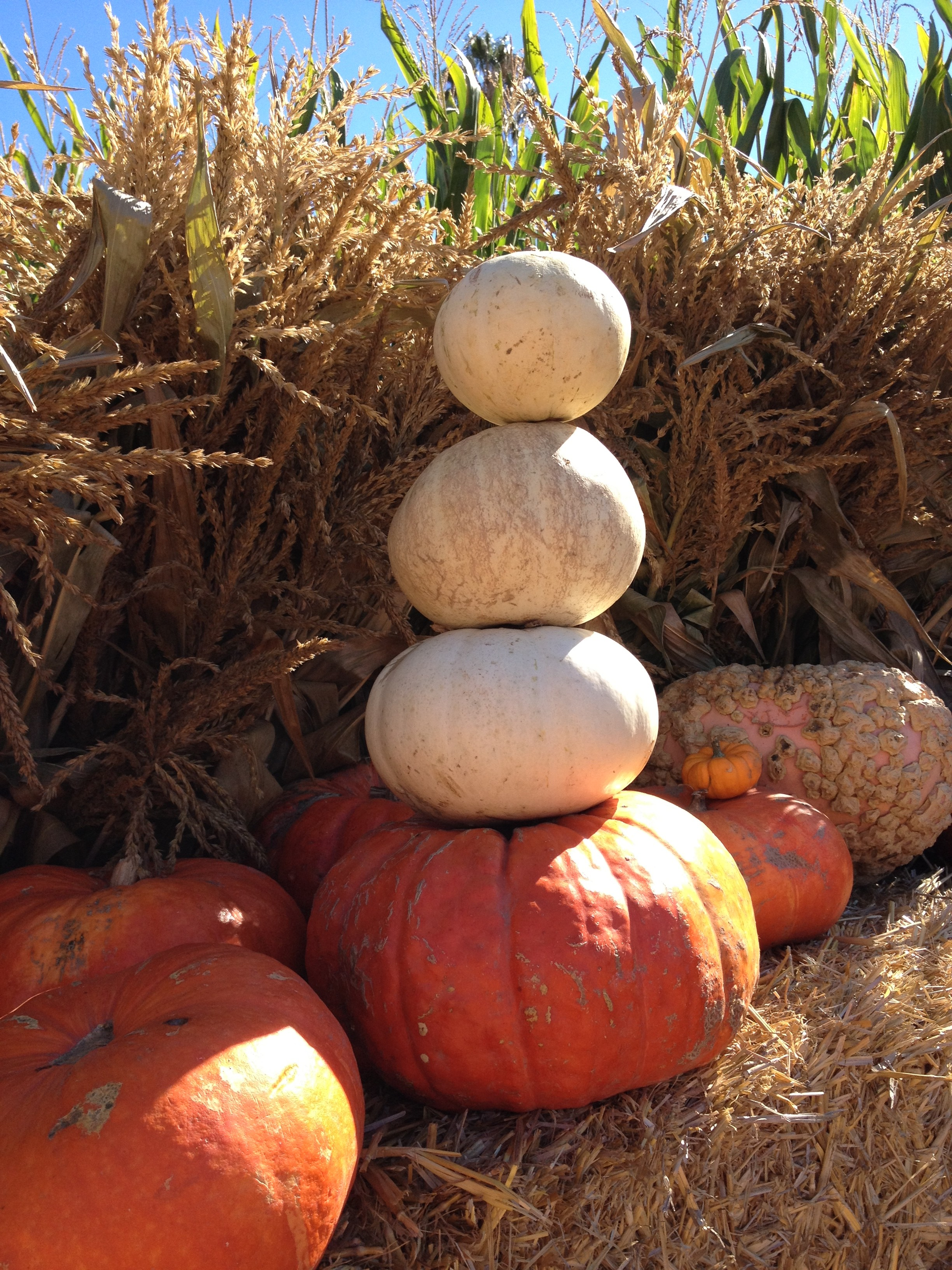 Pumpkins JB