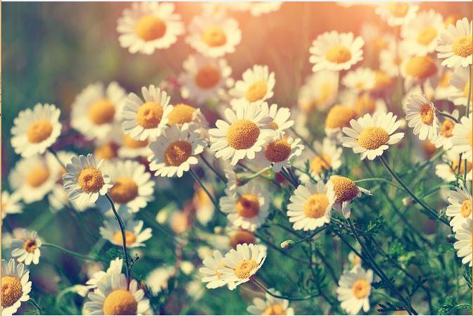 JoAnna Brandi, Return on Happiness